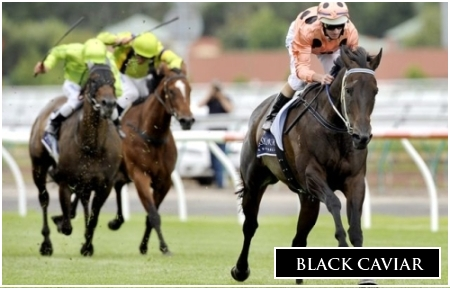 Black Caviar Named Horse Of The Year For Third Time