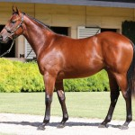 $1.4m Colt Smashes Victorian Record At Inglis Yearling Sale