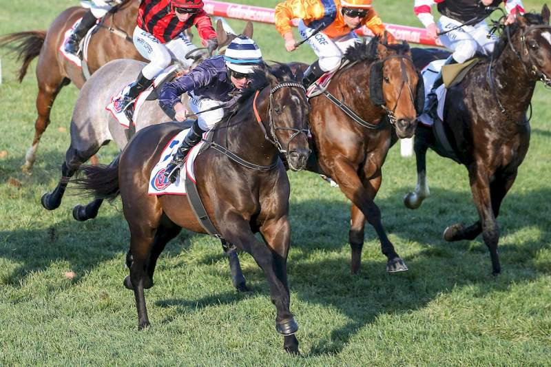 Gilgai Bred Supido Wins The Group 3 Monash Stakes At Caulfield Pat Scala Racing Photos