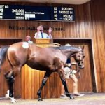 100% Clearance For Gilgai At Inglis Premier