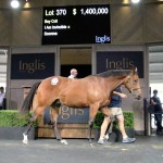 Top Easter Colt By I Am Invincible For Gilgai Farm